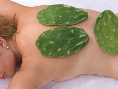 Kaktus Massage